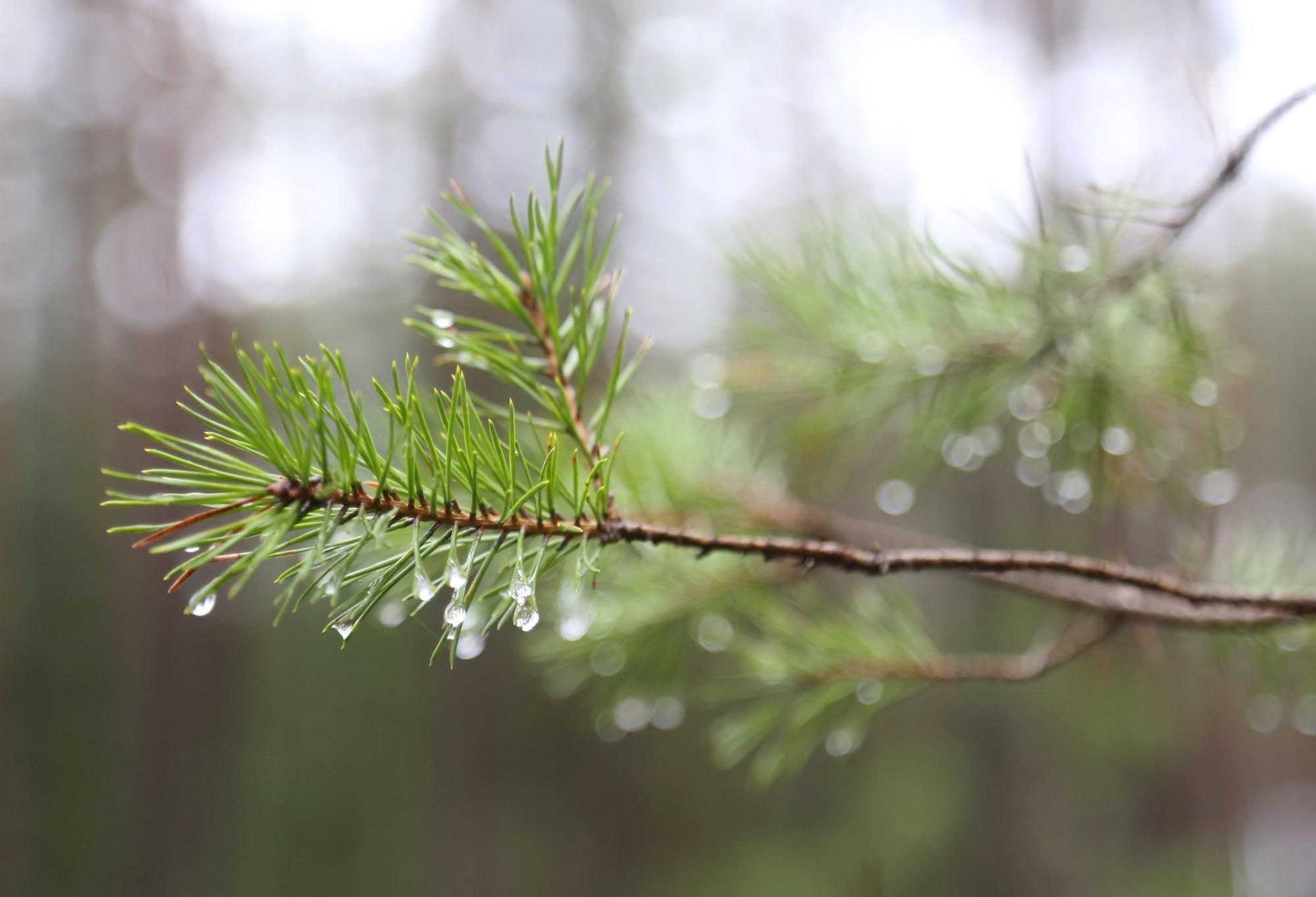 Meža nozare klimata pārmaiņās