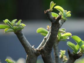 Gaidītā izaugsme neizpaliek, bet neizgaist arī neziņa